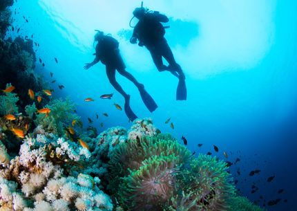 Open Water Diver (OWD) Sharm